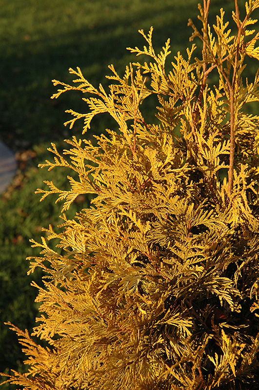 golden indian landscaping indianapolis